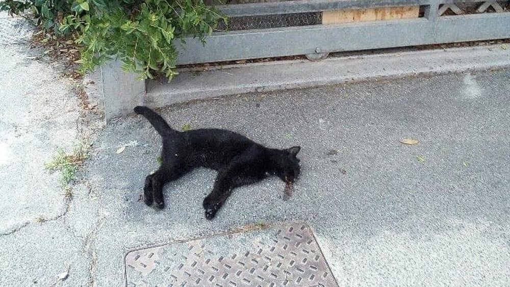 Cani E Gatti Morti In Strada Ecco Chi Chiamare E Come Comportarsi