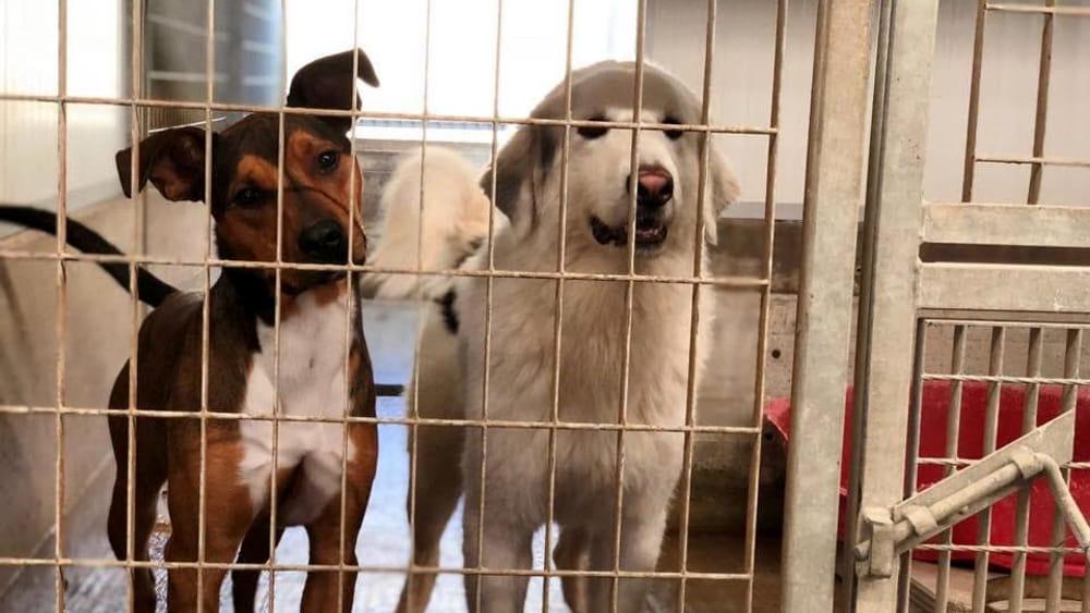 Canile di Cesena, i volontari di Acpa preoccupati per il futuro dei cani - CesenaToday